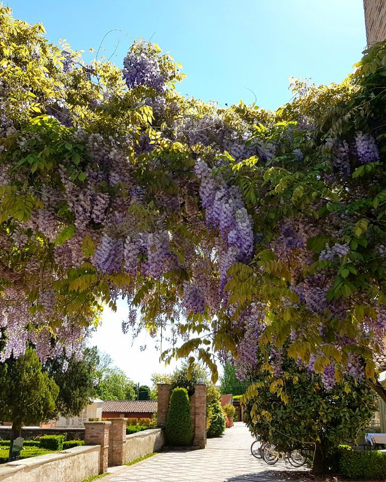 Relais-SantUffizio-Wellness-and-SPA-in-Piedmont-entrance-and-wisteria